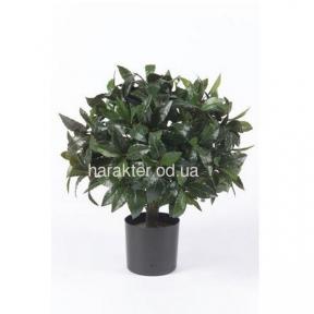 лавр декоративный 45 см