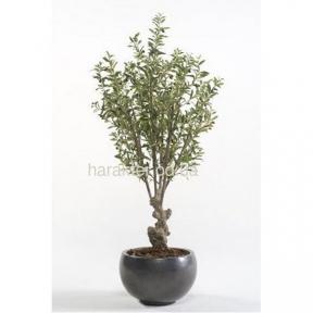 оливковое дерево декоративное 70 см